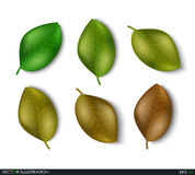 Set of leaves different shades design elements. Green sprout green leaves symbol vector icon set. Ecological theme. Greenery. Eco. Vector Illustration Royalty Free Stock Image