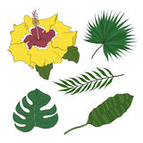 Set of leaves different species palm trees and hibiscus flower. Royalty Free Stock Images