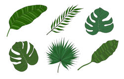 Set of leaves different species palm trees. Royalty Free Stock Photography