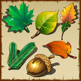 Set of leaves from different trees, six icons Royalty Free Stock Image
