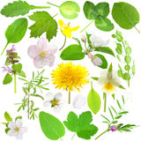 Set of leaves and flowers. Isolated on white background Royalty Free Stock Photography