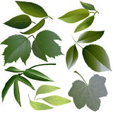Set of leaves of flowers Stock Photo