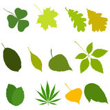Set of leaves icons isolated on white background. Vector stock illustration Stock Image