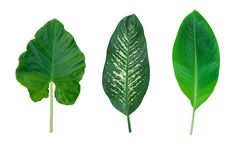 Set of  leaves isolated on white background for decor your project.  royalty free stock images