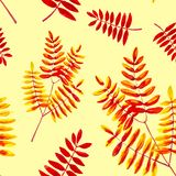 Set from leaves of the Rowan branch . Watercolor illustration isolated on yellow background.Seamless pattern royalty free illustration