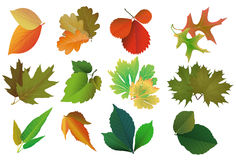 Set of leaves, seasons Royalty Free Stock Photos