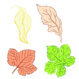 Set leaves. Of multicolored. Vector illustration. EPS 10 Stock Photography