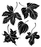 Set of leaves silhouette Royalty Free Stock Photos