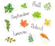 Set with leaves and text Royalty Free Stock Image