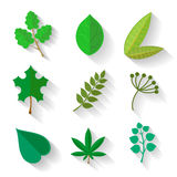 Set of leaves  various trees. Isolated green leave Royalty Free Stock Image
