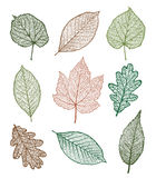 Set of leaves Stock Image