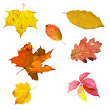 Set of leaves on white Royalty Free Stock Photography