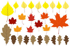 Set of leaves for your design Stock Image