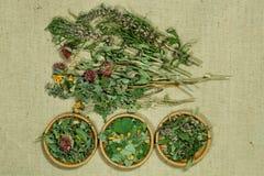 Set leczniczy ziele Obrazy Royalty Free