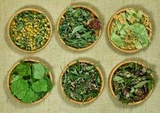 Set leczniczy ziele Zdjęcia Royalty Free