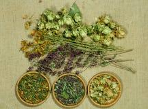 Set leczniczy ziele Obrazy Stock