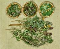 Set leczniczy ziele Fotografia Royalty Free
