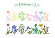 Set leczniczy ziele ilustracja wektor