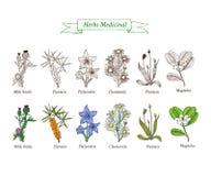 Set leczniczy ziele, kwiaty ilustracja wektor