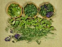 Set leczniczy ziele Susi ziele dla use w alternatywnej medycynie Obrazy Royalty Free