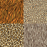 Set of leopard, cheetah, tiger and zebra skins. vector illustration