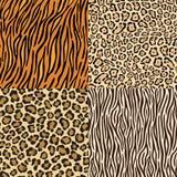 Set Leopard-, Gepard-, Tiger- und Zebrahäute. Lizenzfreie Stockfotografie