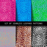 Set of leopard seamless patterns. Vector illustration. Can be used as a fashion print for the fabric Stock Photography