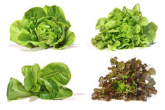 Set with lettuce salad on white background. Royalty Free Stock Image
