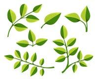 Set liścia projekta elementy również zwrócić corel ilustracji wektora Obraz Royalty Free