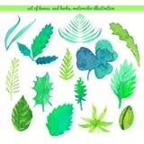 Set liści i ziele kolor Wektorowa akwareli ilustracja Zdjęcie Royalty Free
