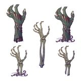 Set of lifelike depicted rotting zombie hands and skeleton hands rising  Stock Photos