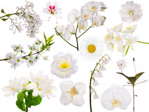 Set of isolated white flowers Royalty Free Stock Images