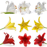 Set lily on white background isolated Stock Photo