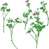 Set of line drawing clovers. Wild flowers, hand drawn vector illustration Royalty Free Stock Photos
