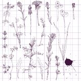 Set of line drawing flowers and grass Stock Photo