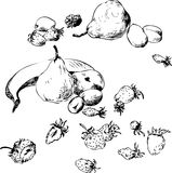 Set of line drawing fruits Stock Photo