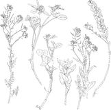 Set of line drawing herbs and flowers Royalty Free Stock Photography