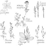Set of line drawing herbs with Latin names Royalty Free Stock Photos