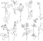 Set of line drawing herbs Royalty Free Stock Photography