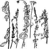 Set of line drawing herbs Royalty Free Stock Image