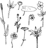 Set of line drawing herbs Royalty Free Stock Images