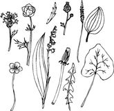 Set of line drawing herbs Stock Photography