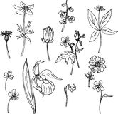 Set of line drawing herbs Stock Image