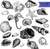 Set of line drawing shells Royalty Free Stock Photography