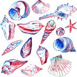 Set of line drawing shells Stock Images
