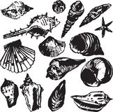 Set of line drawing shells Stock Photos