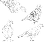 Set of linear drawing doves Royalty Free Stock Photo