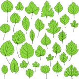 Set of linear drawing leaves Stock Photos