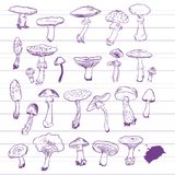 Set of linear drawing mushrooms. Vintage vector illustration Stock Image