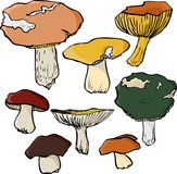 Set of linear drawing mushrooms Stock Photography
